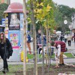 Sadzenie drzewek akcja likwidacji wyspy ciepła w Radomiu